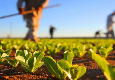 Agricultura destaca medidas tomadas pelo CMN na quinta-feira